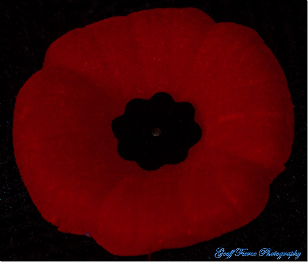 A photograph of a deep red poppy with a black centre as we would wear in honour of those who gave their lives for our freedom.