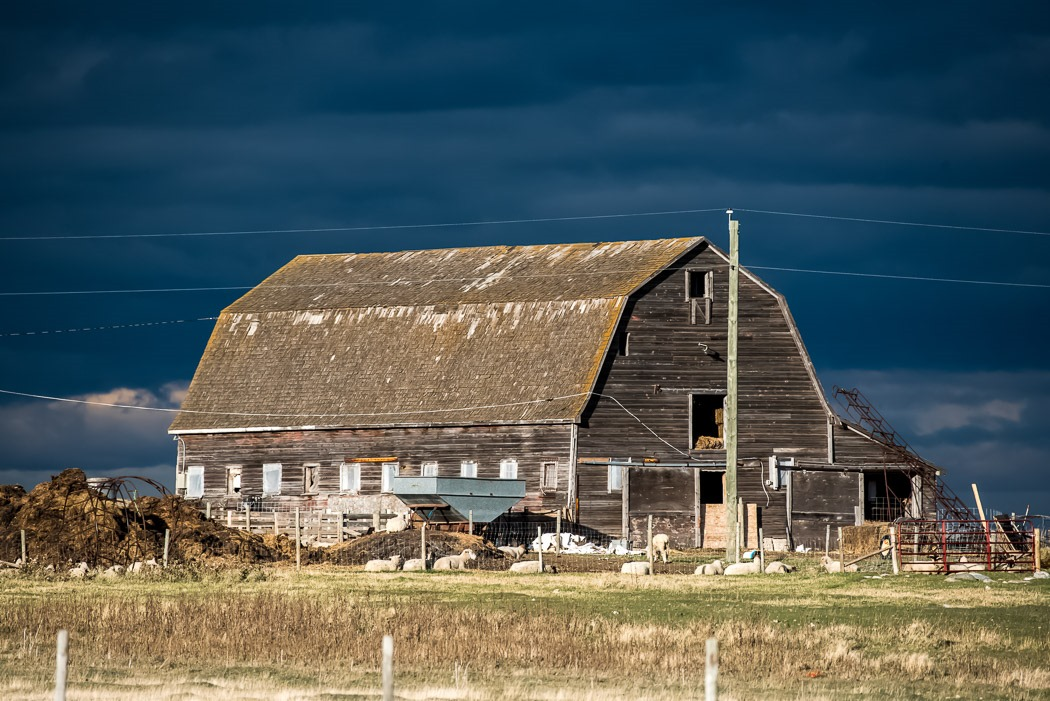 Dark skies and a sunlit old Barn, still in use along the Manitoba Prairies.